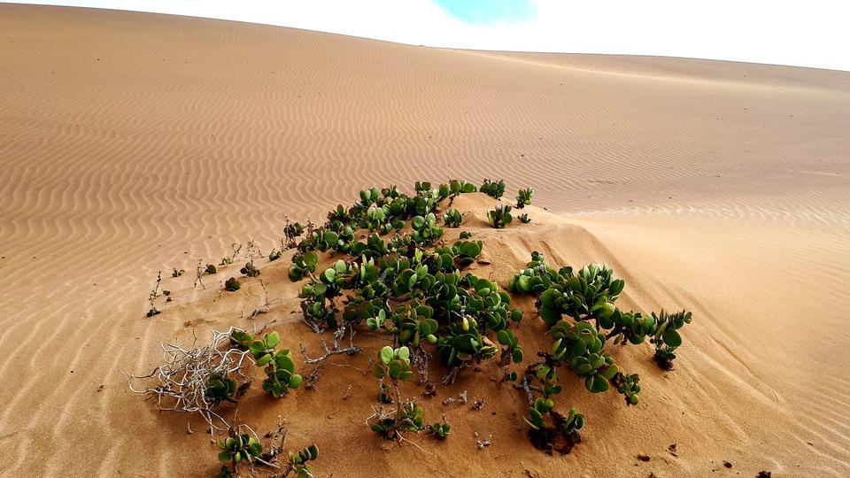 多罗布国家公园,斯瓦科普蒙德,纳米比亚