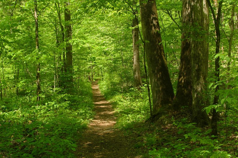 Hike path through a forest in spring, young green foliage