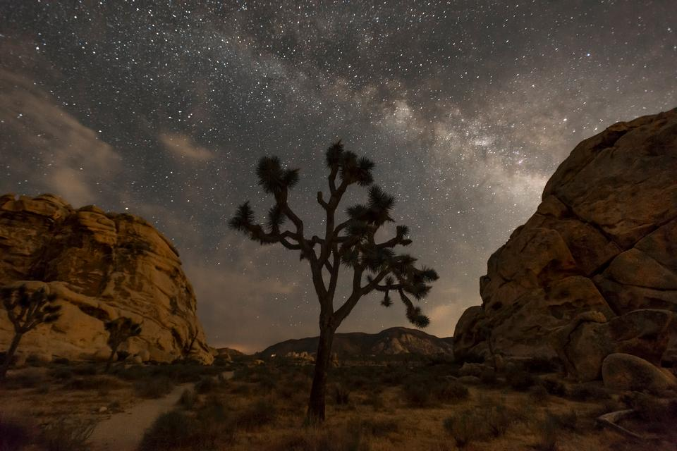 Cielo notturno di Joshua Tree National Park