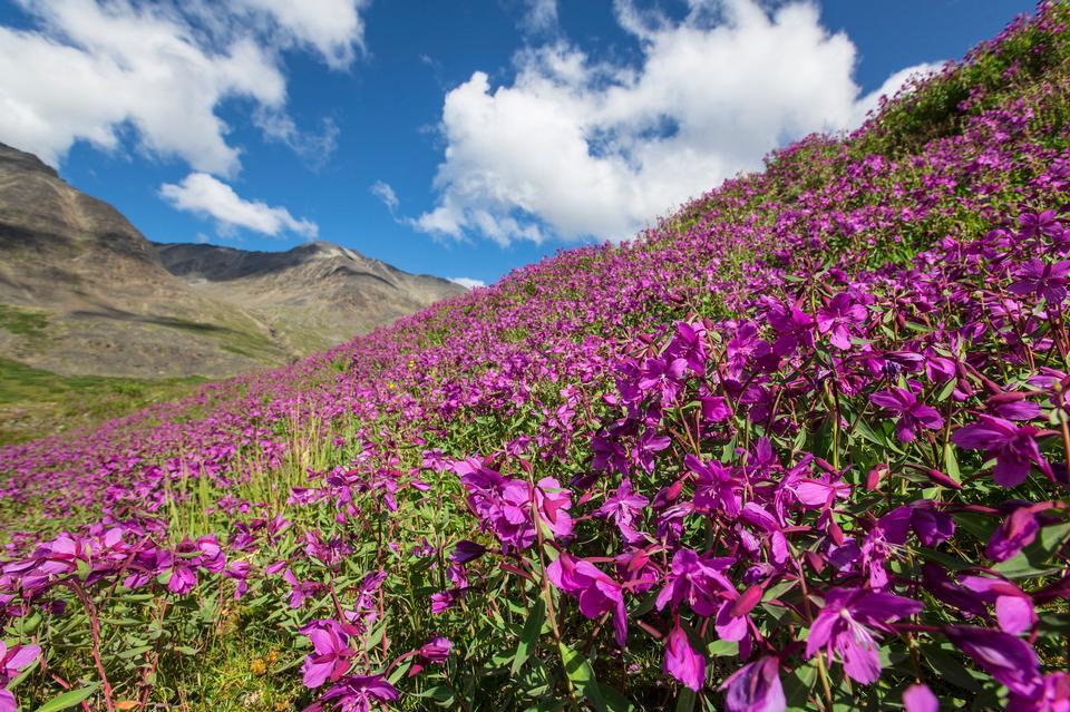 Wildflowers of Bremner