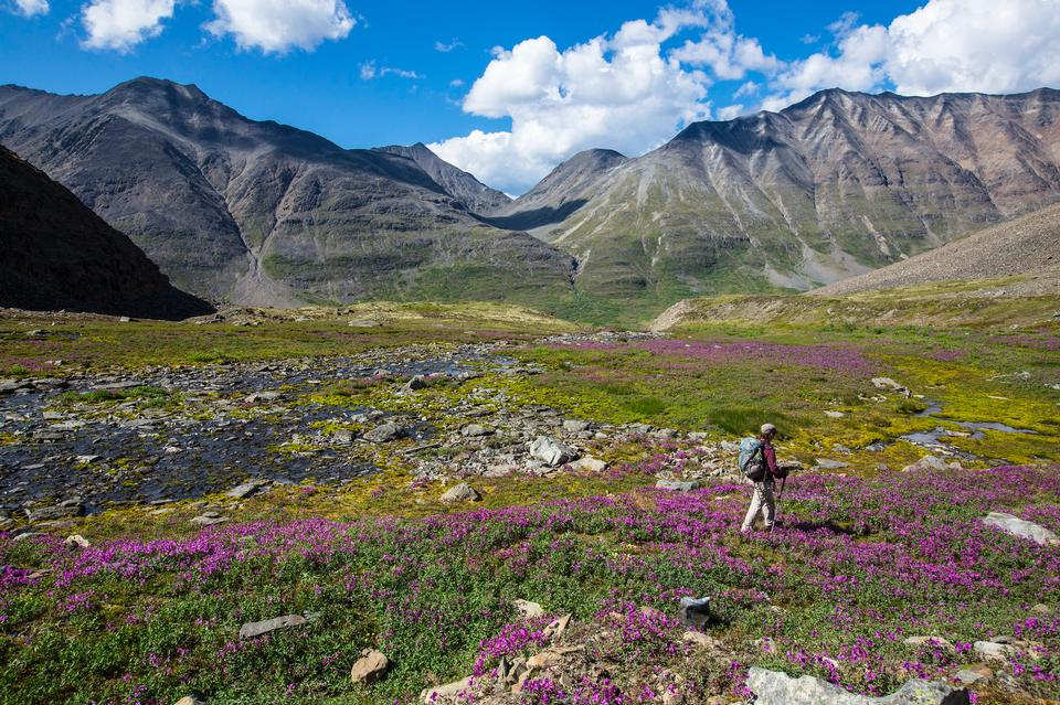 Hiking in the Alpine in the Bremner District