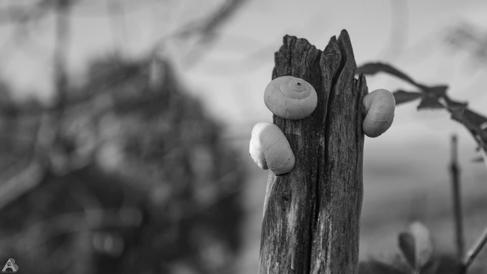 Snail hibernation