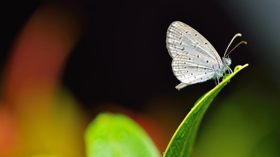 grünes Blatt mit Schmetterling