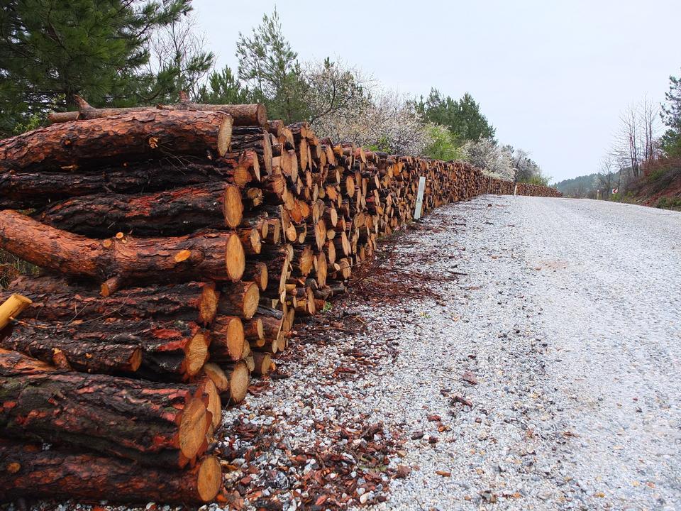 山の中で積み上げ、森の中の松林の木の丸太