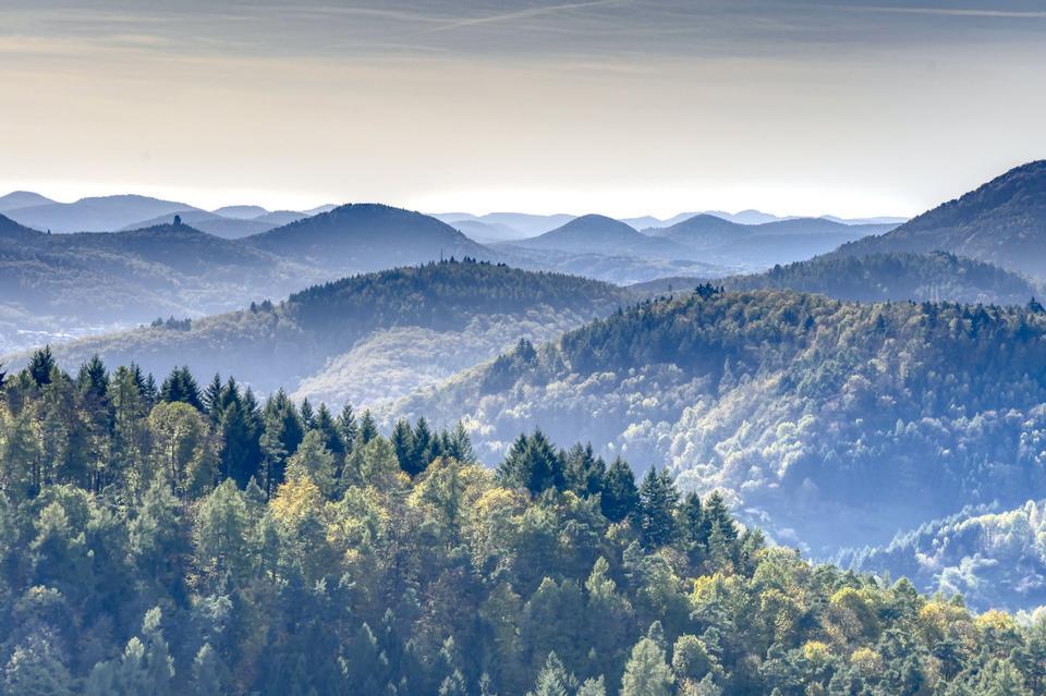 Veduta aerea di alberi nella foresta del Palatinato. Rhineland