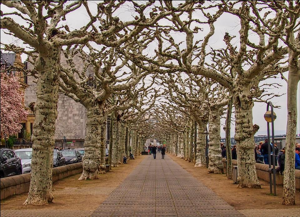 straight pathway surrounded by bare tree