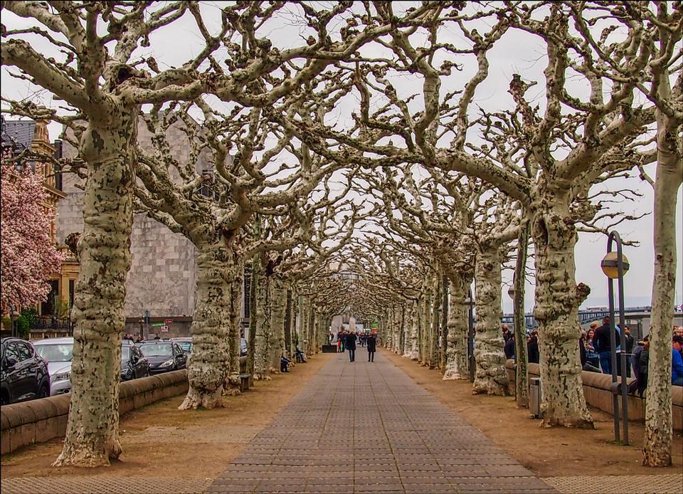 gerader Weg, umgeben von kahlem Baum