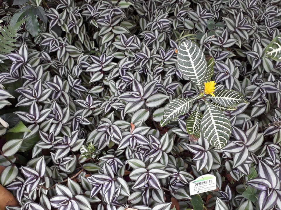 釜山(プサン)の華明植物園