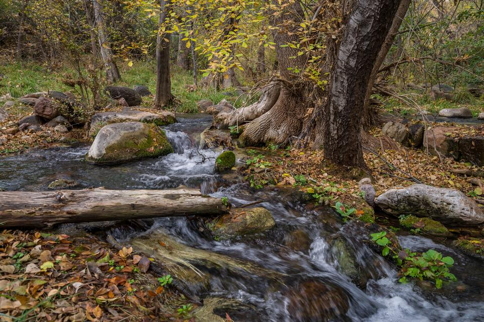 Autumn at Fossil Springs in Coconino National Forest