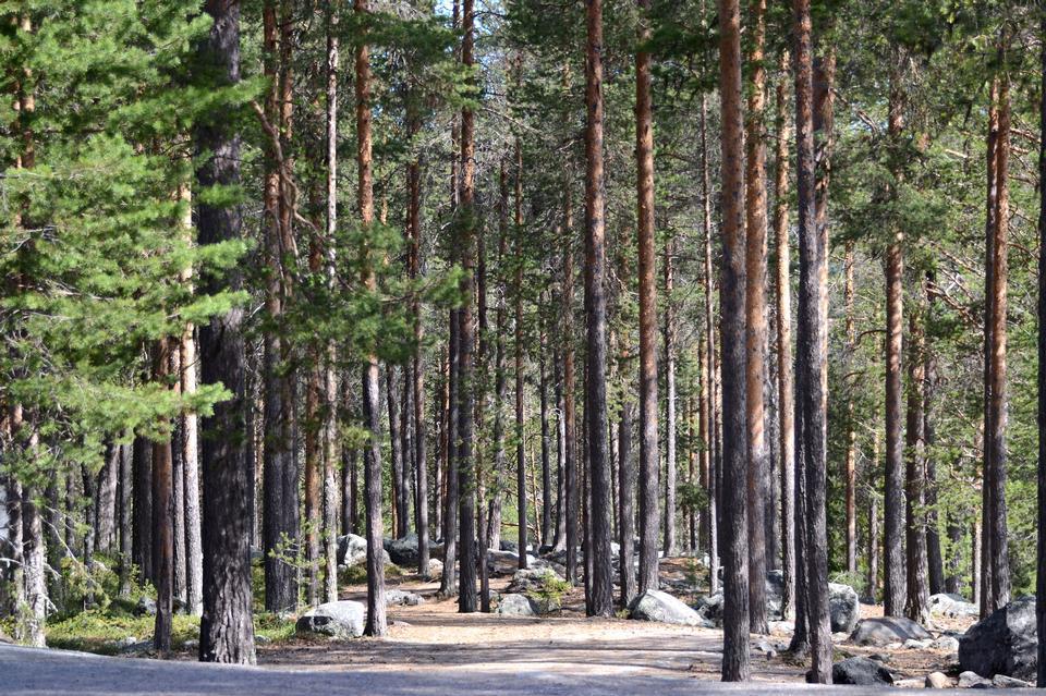 Scenic Shots around Sweden