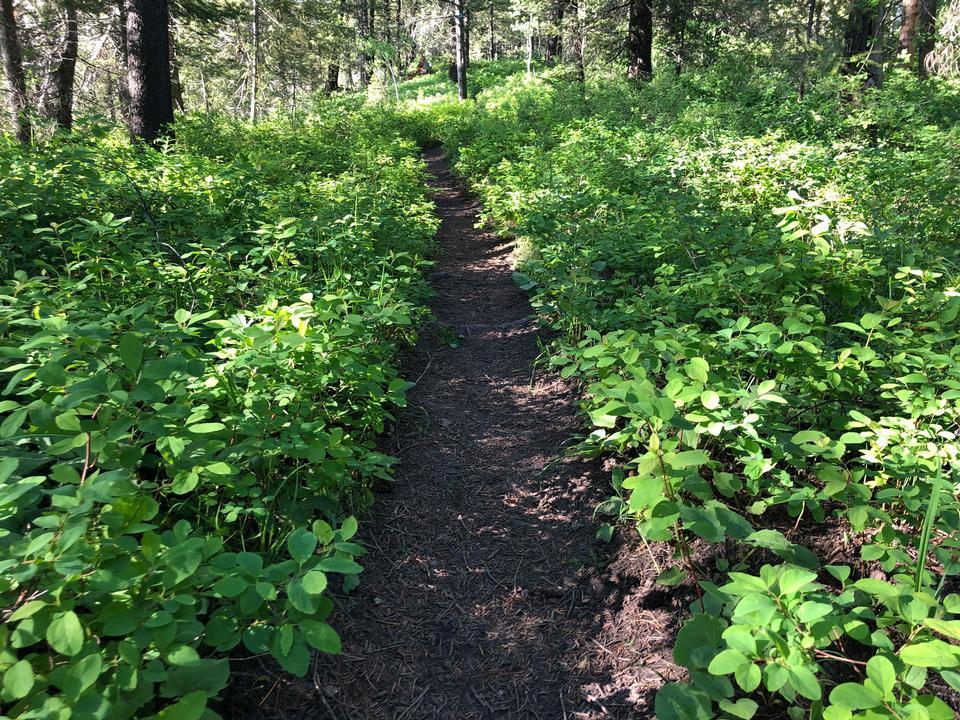 Small Trail