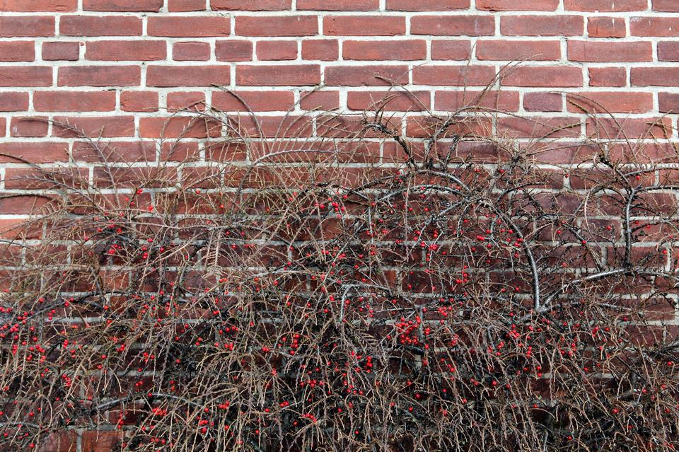 shrubs and brick fence