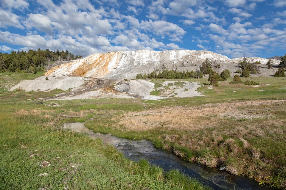 Canary Spring in Yellowstone National Park