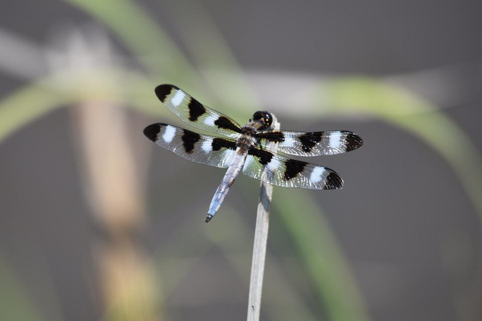 The dragonfly soaking up the sun from a perch