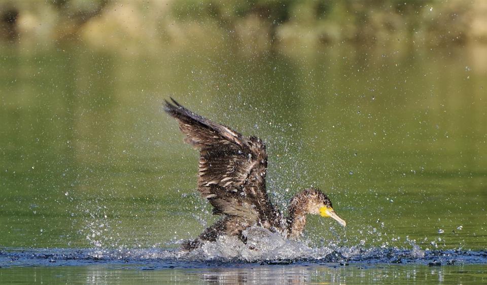 Atterraggio freddo del lago di vita dell'acqua sorgiva della natura della mosca d