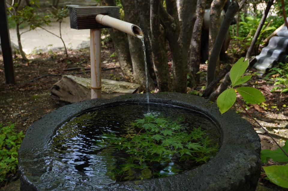 Japanese bamboo water sprout