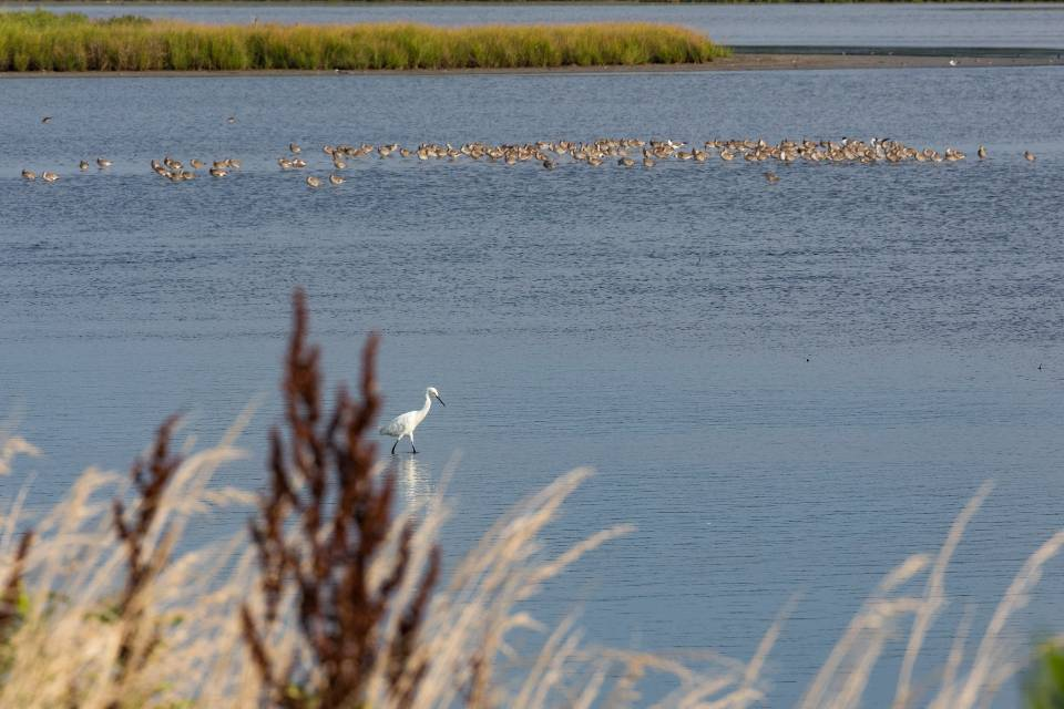 Chincoteague National Wildlife Refuge