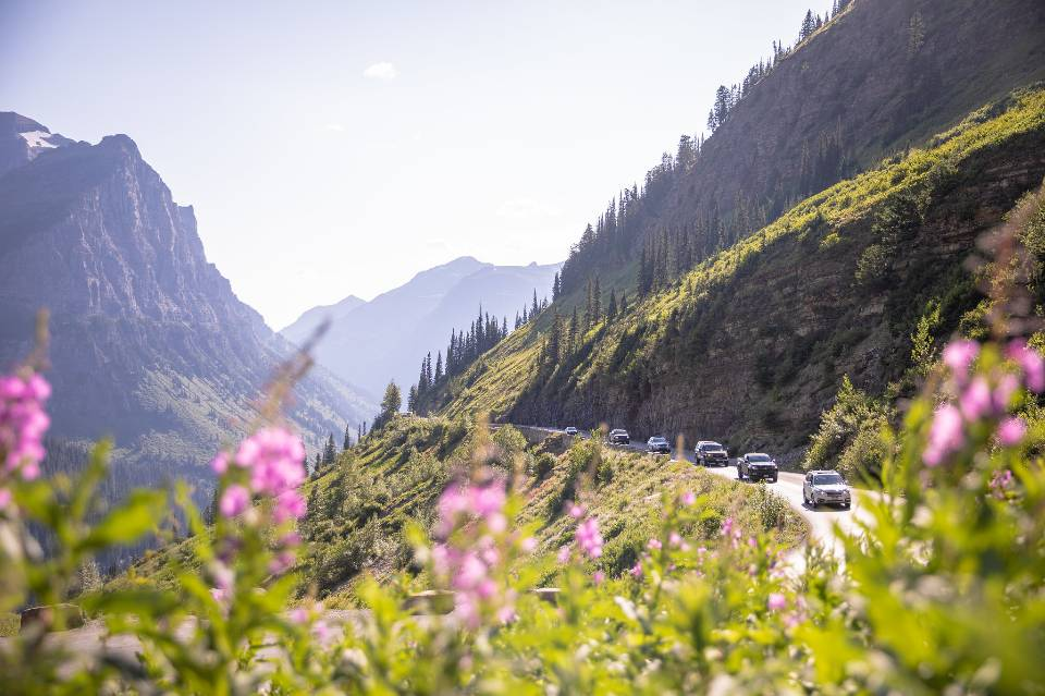 Fireweed Blooms in Glacier National Park