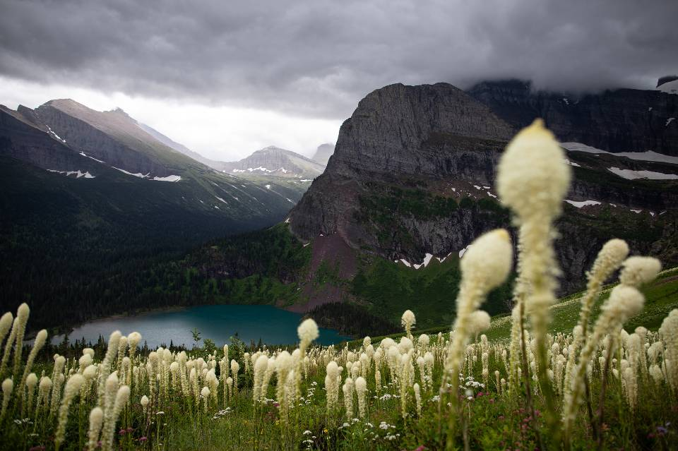 Beargrass above Grinnell Lake