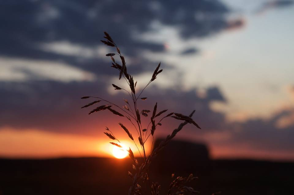 solitary tree in golden sunset