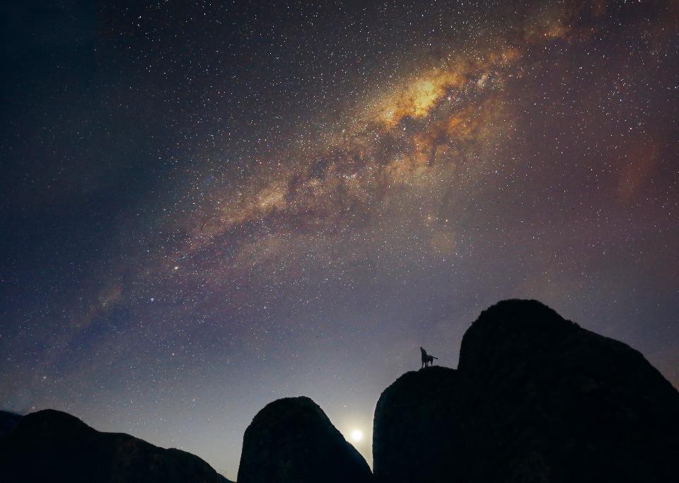 天の川の背景に山の動物