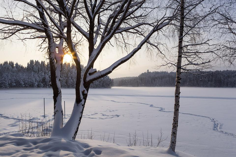 Winter scene with snowy trees and river covered with ice