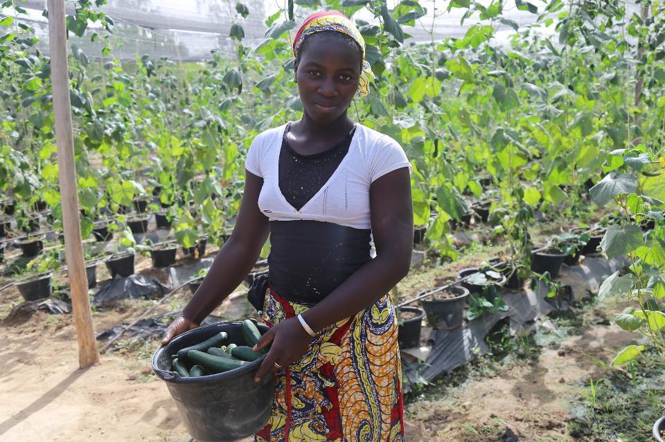 African american woman harvesting fresh vegetables
