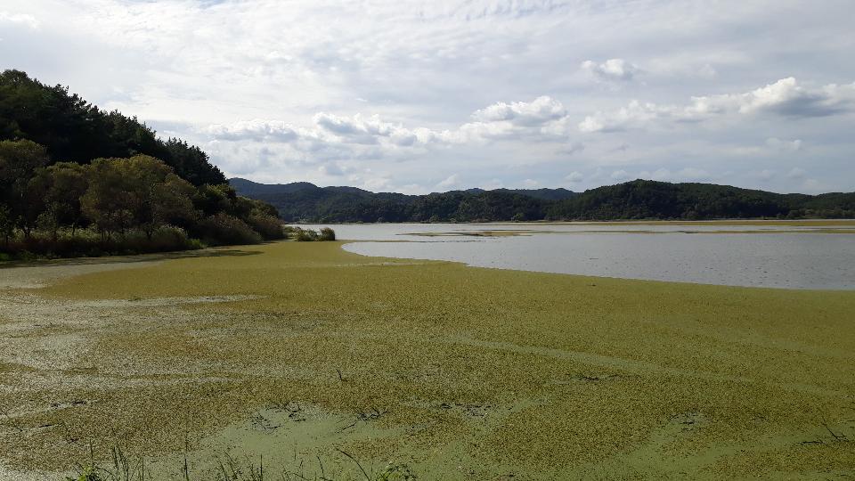 Upo Wetland in Changnyeong Korea