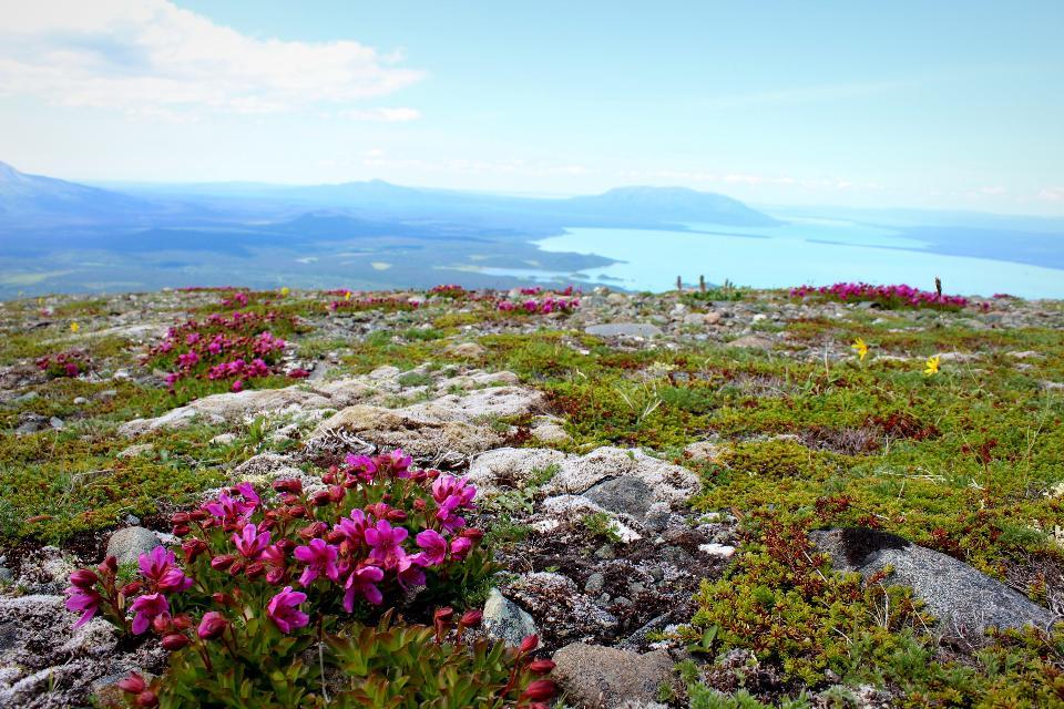 Tundra on Mt. Katolinat