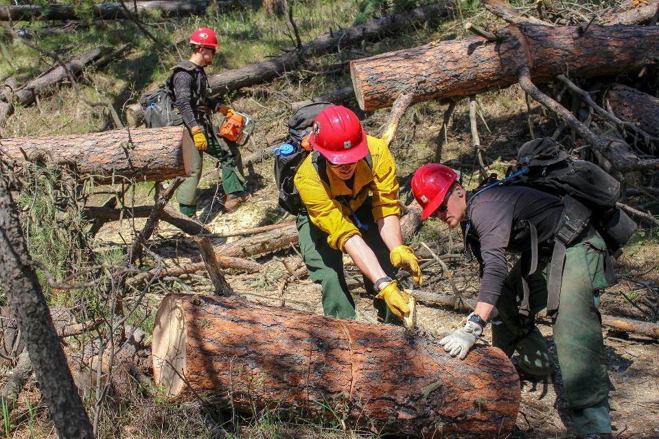 Tatanka Hotshots Cut Trees off