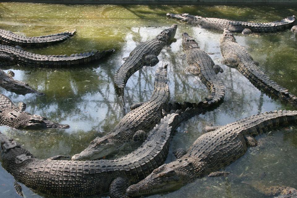 Davao Crocodile Park Mindanao, Philippines