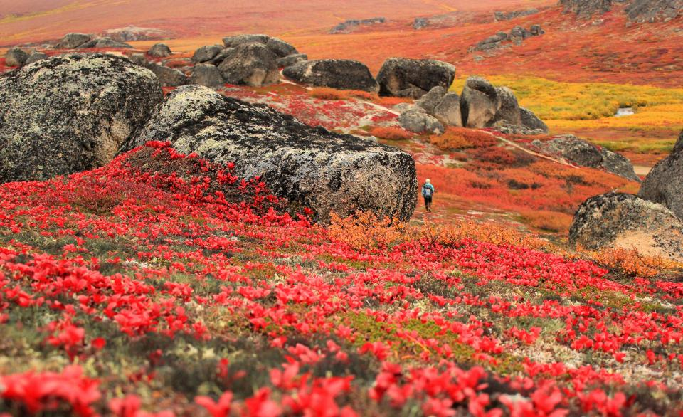 Bering Land Bridge National Preserve in Alaska